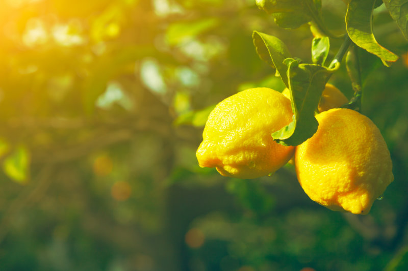 Lemon: The Bitter Fruit That's Sweet For Our Health