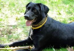 Green-Living-QA-Are-Flea-Collars-Dangerous-For-My-Dog_s-Health_138989306