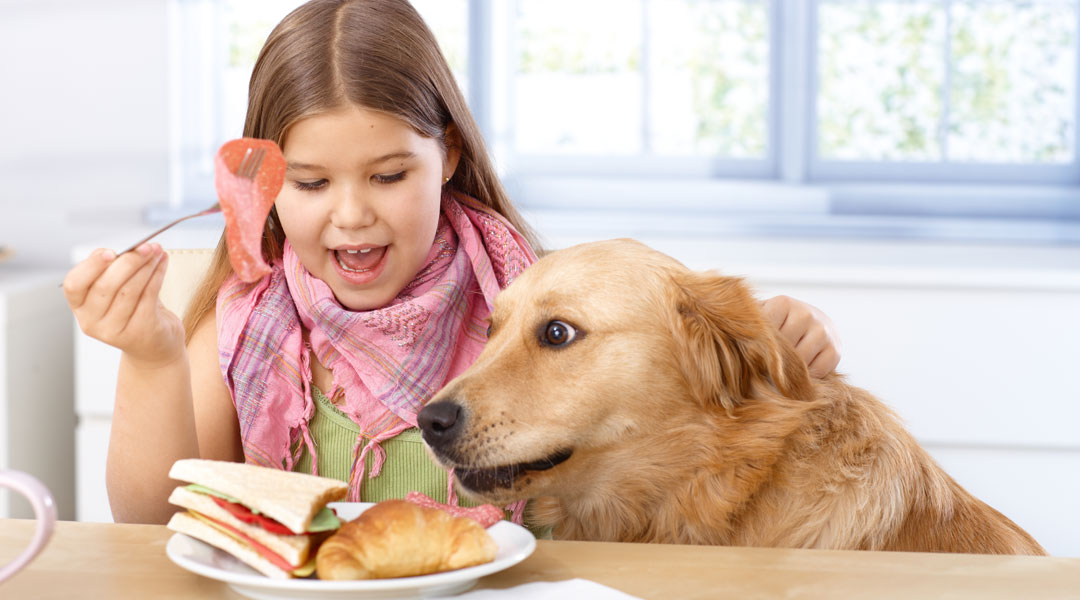 Home Foods To Feed Diabetic Dogs