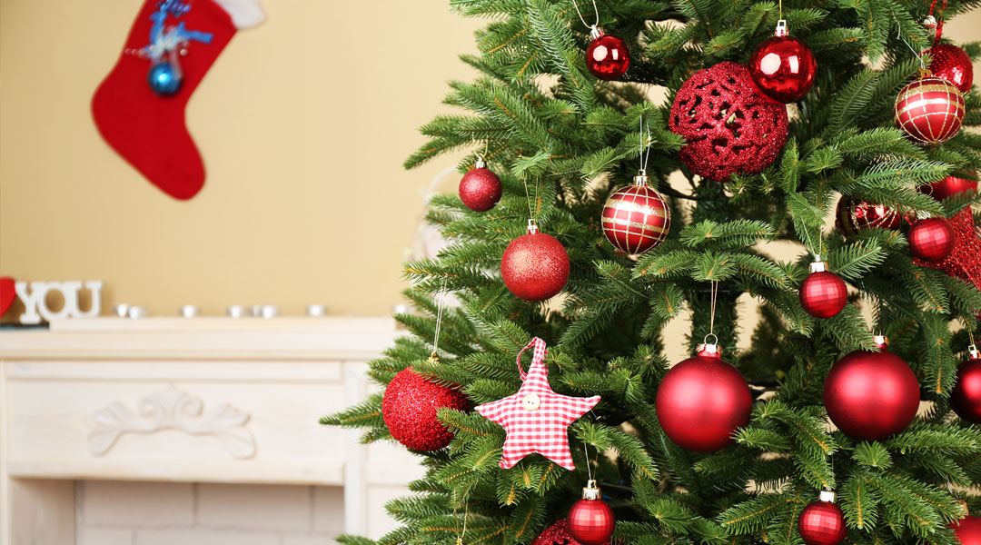 Keep Your Christmas Tree In The Green Of Health - Z Living