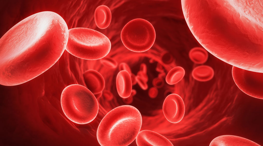 Red-Blood-Cells_75626410
