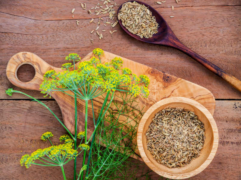5 Natural Home Remedies For Nausea- Dried and Fresh Fennel