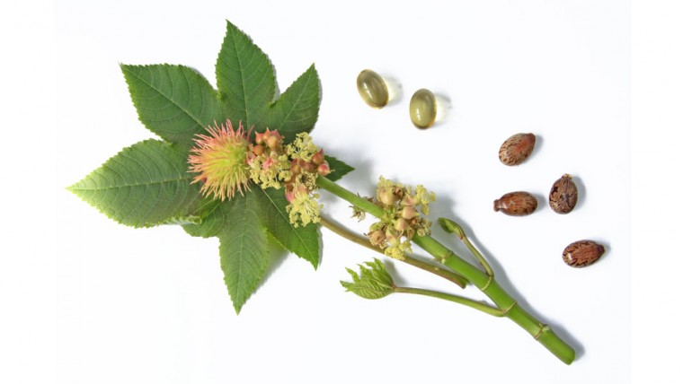 Health-benefits-of-castor-oil_105760493