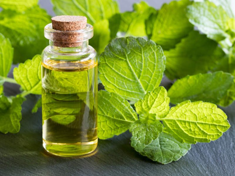Lemon Balm Oil for Cold Symptom Relief