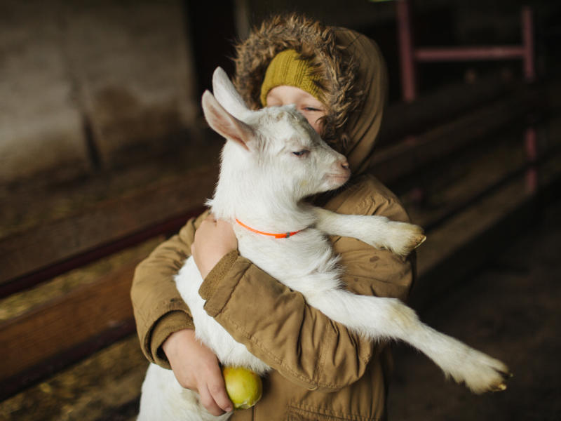 person holding a baby white goat in arms