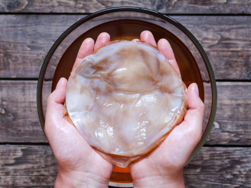 kombucha scoby held in hands