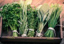 Herbal Remedies for Brain Fog