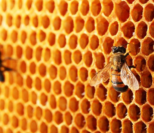 Why Everyone is Buzzing About Bee Propolis For Skincare