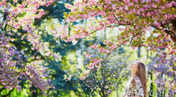 woman under cherry blossom trees enjoying spring weather without allergies