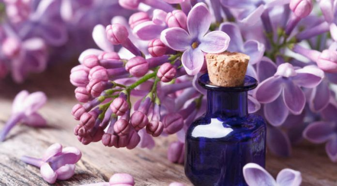 Why Are Natural Fragrance Oils Appealing and How Does It Work?