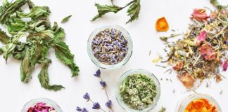 Beginners Guide To Herbalism: Everything You Will Need