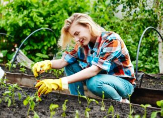 woman gardening fruits and veggies