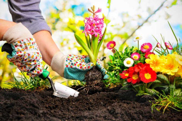 Outdoor Series: Surprising Health Benefits of Gardening