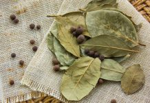 Can Indian Bay Leaf Help Improve Your Respiratory and Digestive Systems?