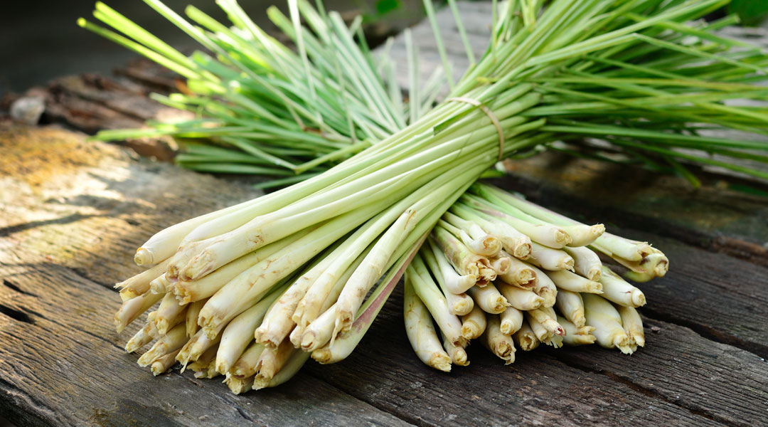 Lemongrass-Benefits_107826104