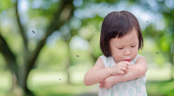 The Link Between Mosquitoes and Dengue