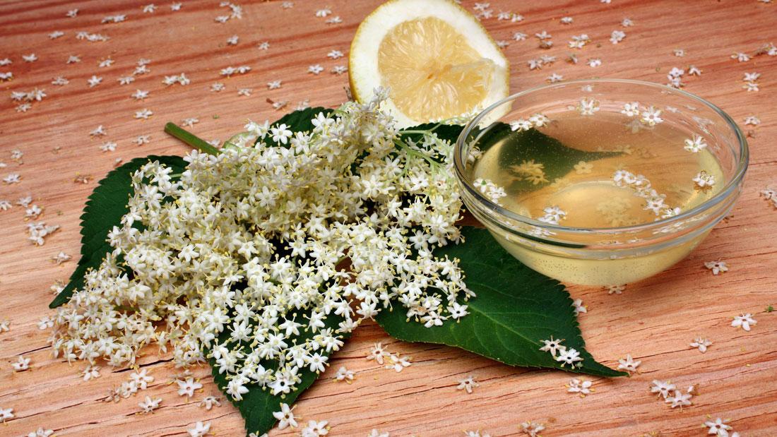 Elderberry-extract-or-tincture_199080416