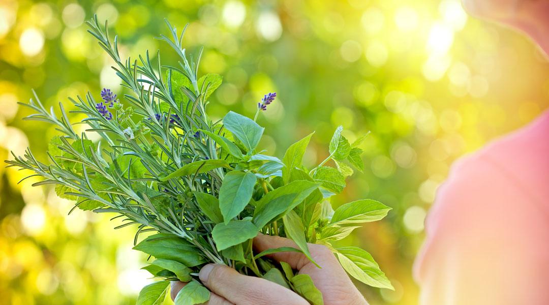 Herbs-For-women_221134741
