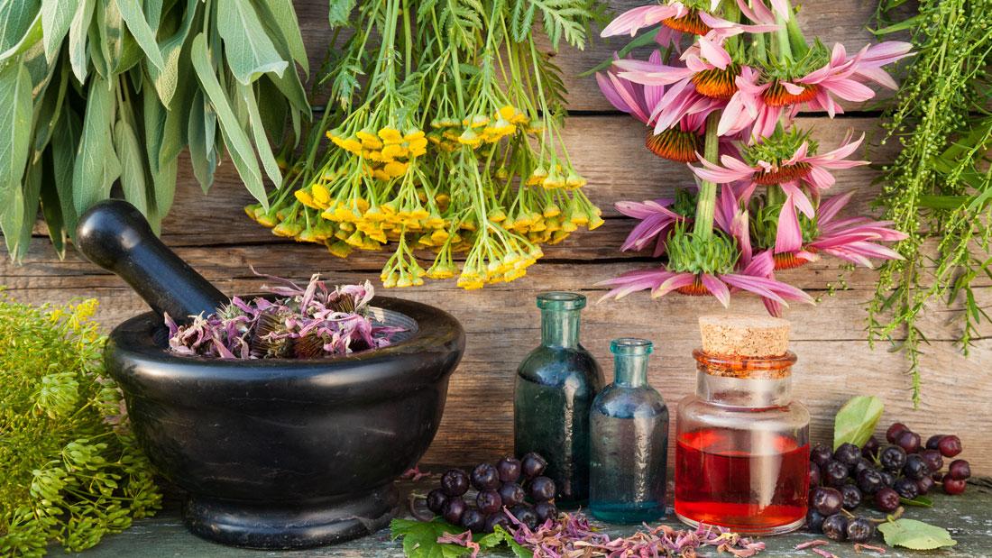 Herbs-for-bone-health_207704086