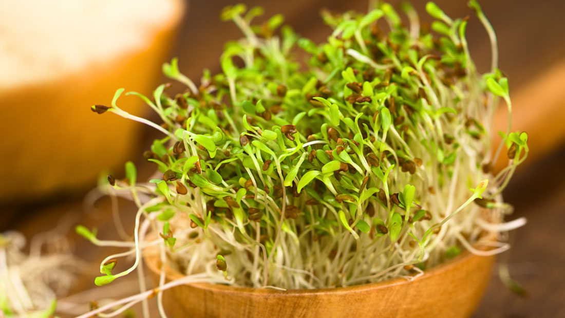 Relieve it with a herb alfalfa for anemia z living a perennial flowering plant belonging to the pea family alfalfa medicago sativa is a rich source of vitamins a c e and k and minerals iron calcium mightylinksfo