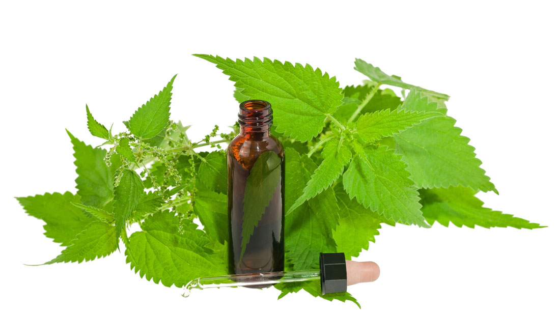 Concentrated nettle extract