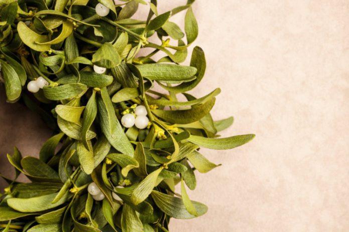The Benefits of Mistletoe Will Make You Wanna Kiss You Ailments Goodbye
