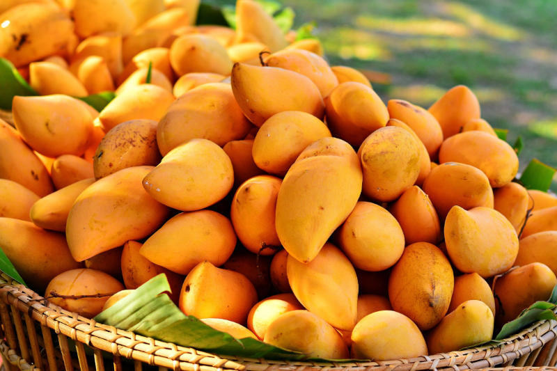 African Mango Irvingia Gabonensis Benefits Side Effects Z