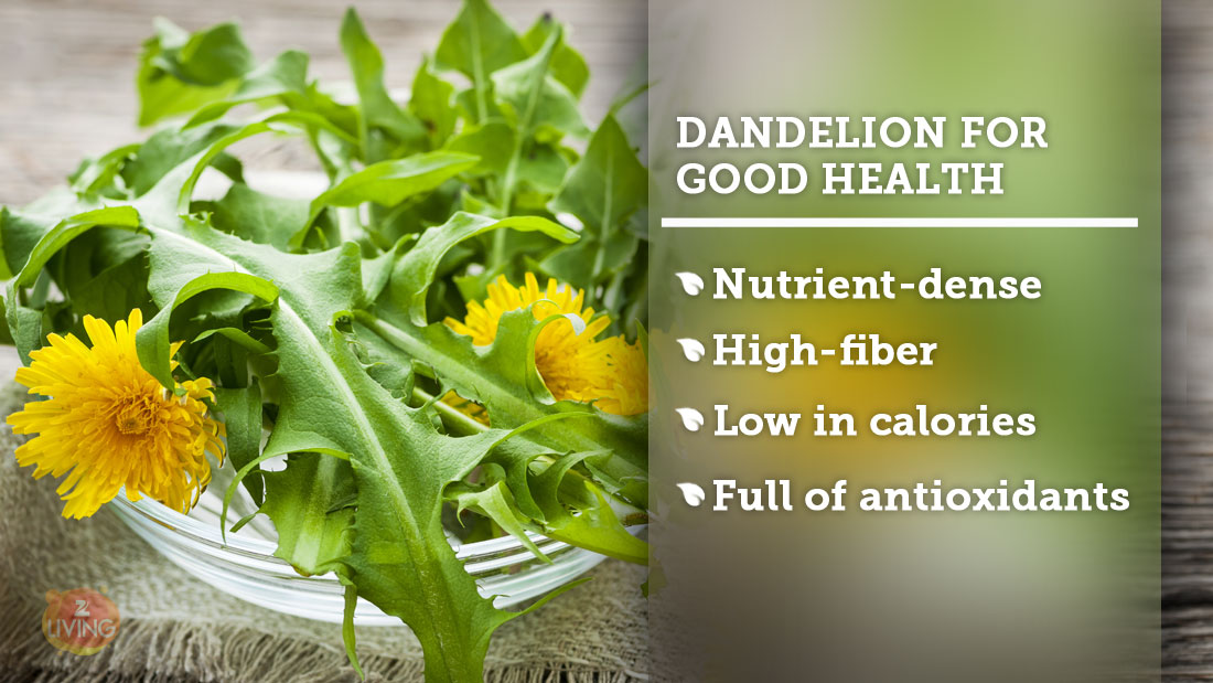 dandelion greens health benefits