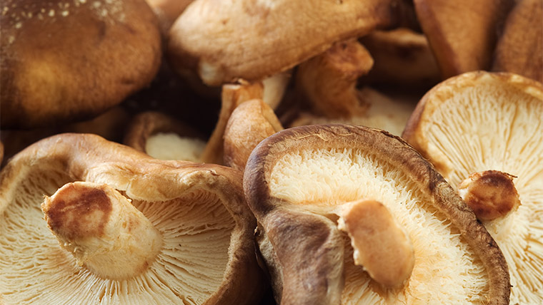 Spotlight on Mushrooms: Why This Magical Veggie Is a Great Addition to Your Diet