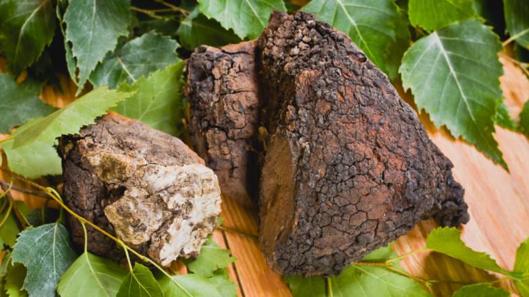 Benefits of Chaga Mushrooms