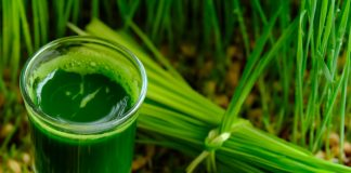 6 Reasons You Should Be Drinking Wheatgrass Juice Everyday
