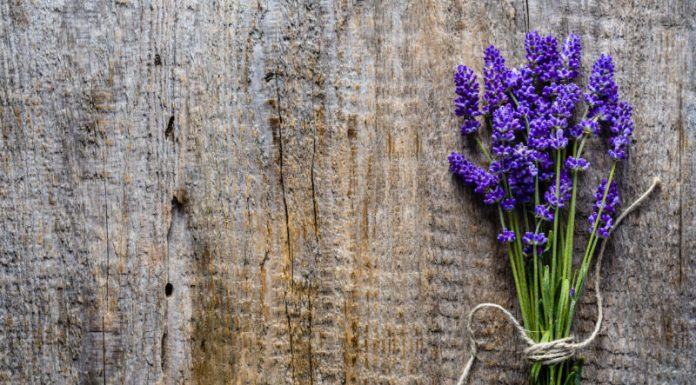 Calm Your Senses With the Benefits of Lavender