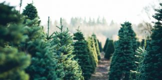Post-Holiday Ideas To Reuse & Repurpose Your Christmas Tree