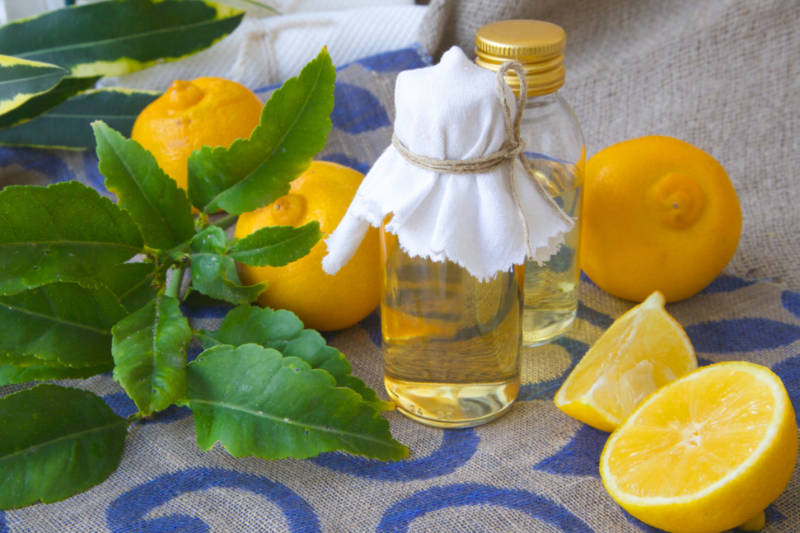 Bergamot Oil | Alleviate Chest Congestion and Reduce Your Fever