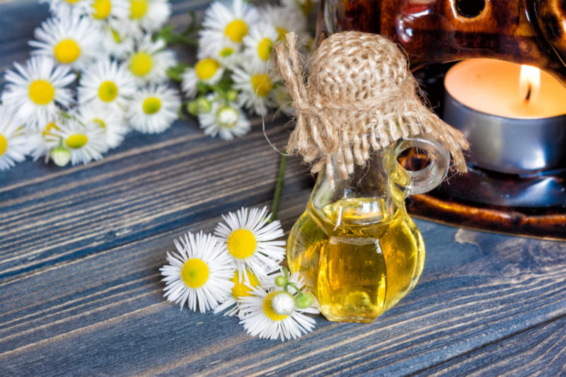 Chamomile Oil | Allow Yourself to Relax and Promote Restful Sleep