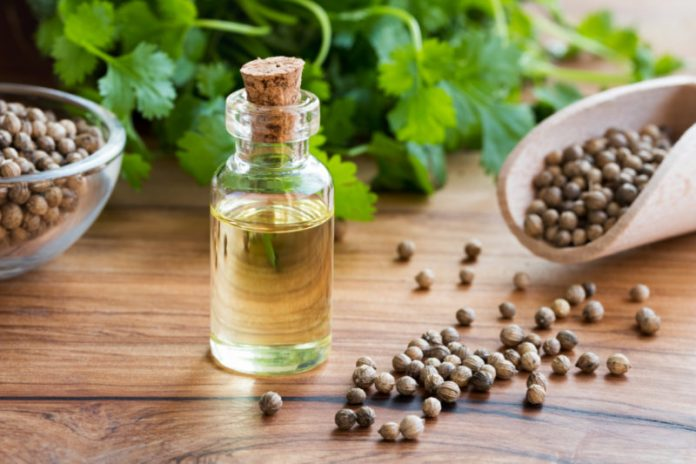 Coriander Oil | Purify Your Blood and Aid Your Weight Loss Program
