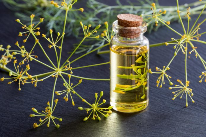 Dill Oil | Detox the Body and Keep Stress and Anxiety at Bay