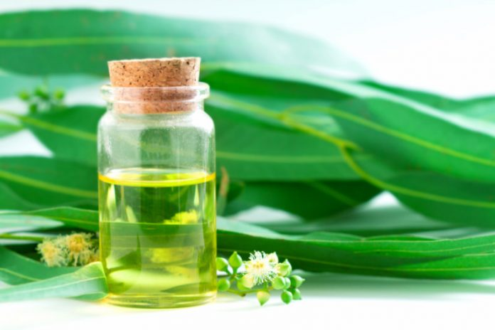 Eucalyptus Oil | Improve Brain Function and Keep Your Mind Alert