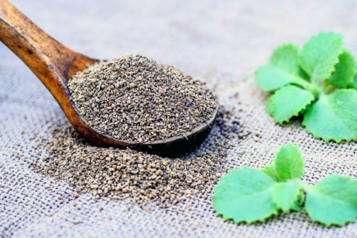 Ajwain Oil | Treat Nasal Congestion and Improve Respiratory Function
