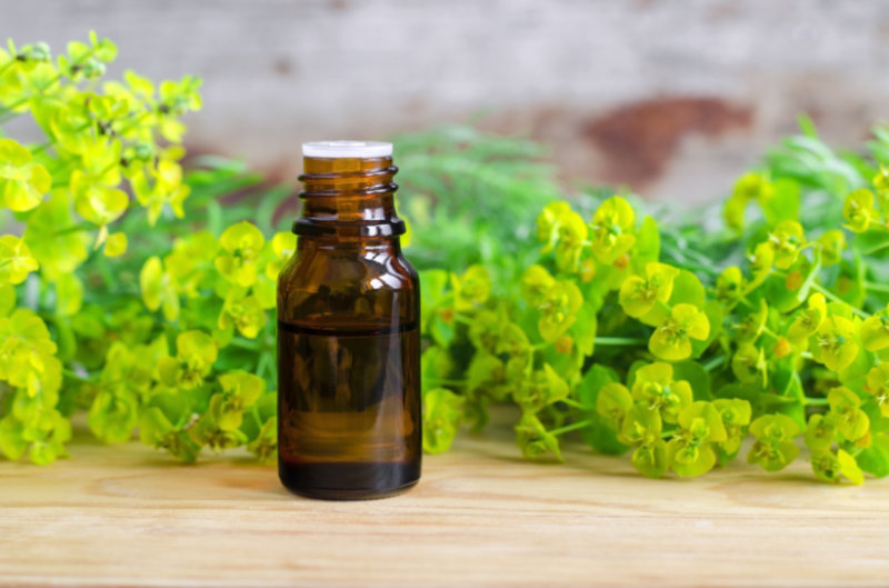 Cypress Oil | Cleanse Your Skin and Prevent Harmful Infections