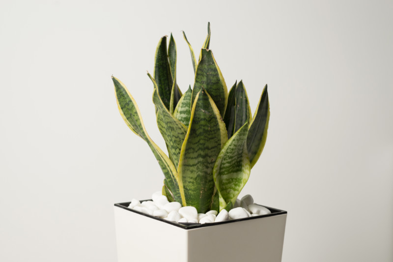 Can Houseplants Improve Your Mood?