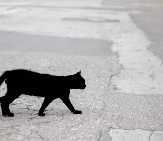 Decoding Superstitions From Around the World