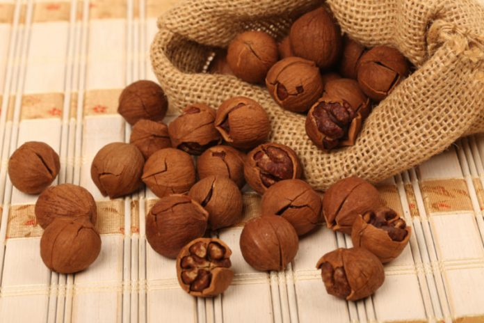 Hickory Nut Oil   Maintain Heart Health and Boost Energy Levels