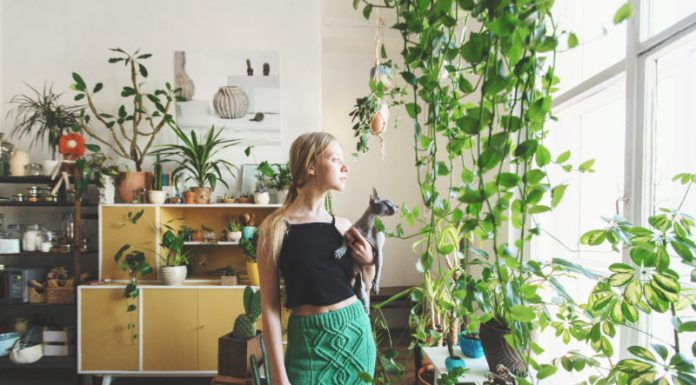 How to Successfully Water Your Houseplants