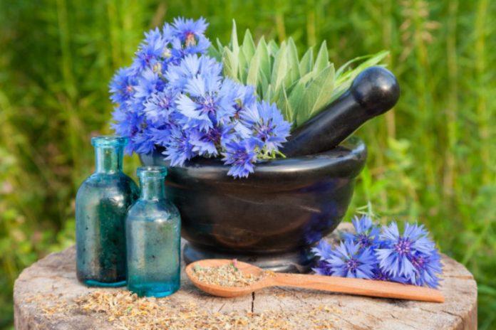 Hyssop Oil | Helps Fight Symptoms of Low Blood Pressure