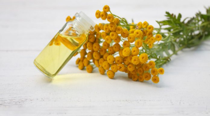 Idaho Tansy Oil | Control Your Allergies and Fight Harmful Bacteria