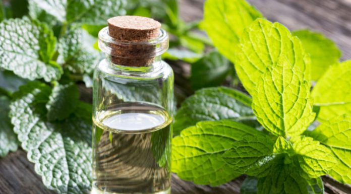Melissa Oil   Improve Immune Function and Fight Inflammation