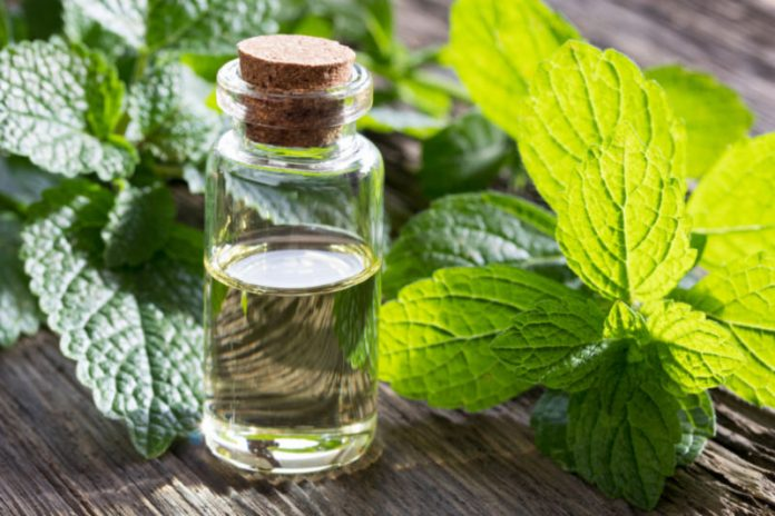 Melissa Oil | Improve Immune Function and Fight Inflammation