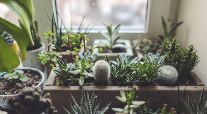 Your Personal Guide For Ailing Houseplants