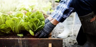 Fall Gardening Tip That'll Keep Your Flowers and Produce Healthy